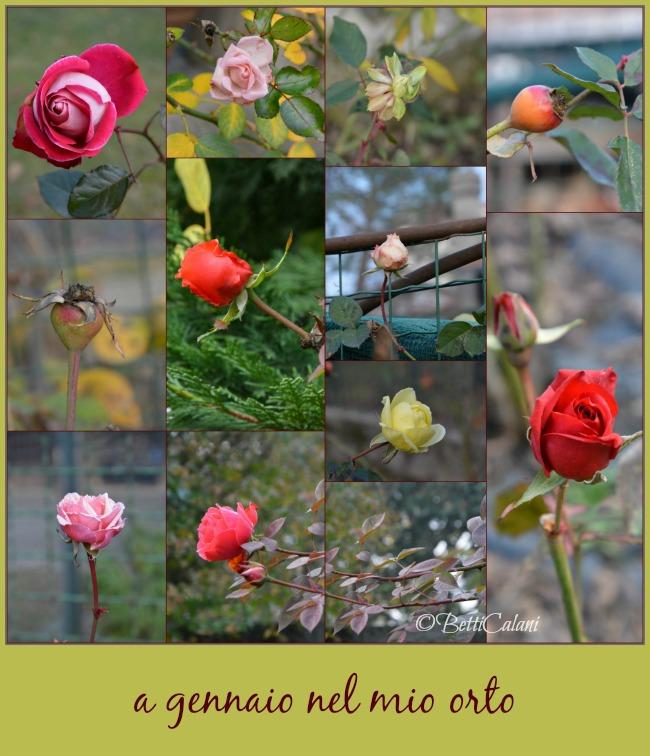 20130111_rose_d'inverno (35)