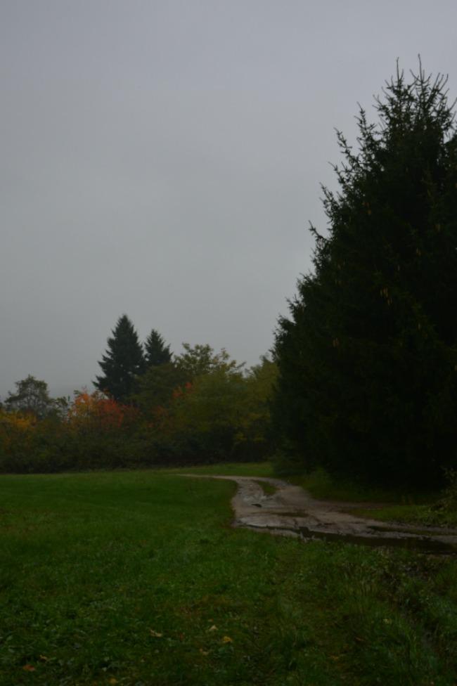 20131024_DSC_passeggiata nel bosco_0690