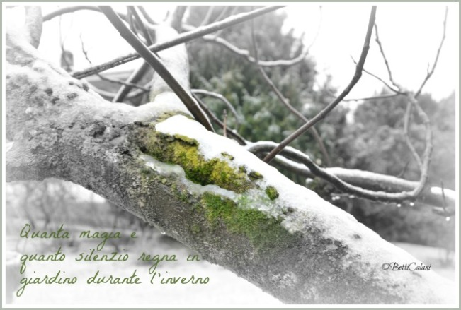 neve sul ramo1_DSC_0098