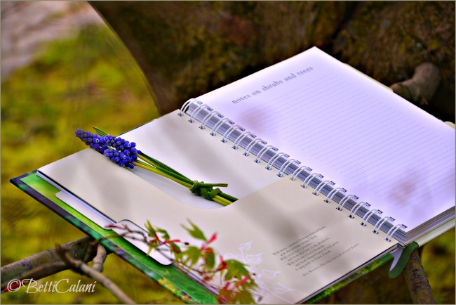 DSC_0024_20140321_My Gardening Journal