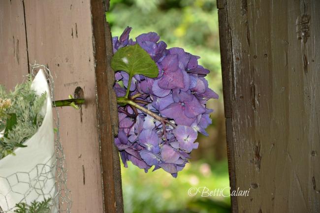 20140701_Pombia_fuchsia_magellanica (119)_
