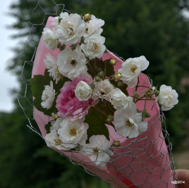 Cono Rose 2_