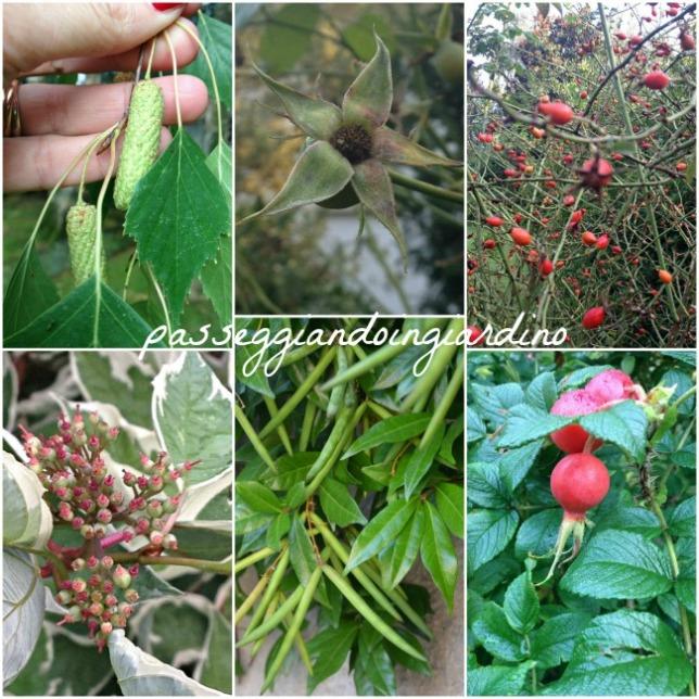i frutti dei miei fiori