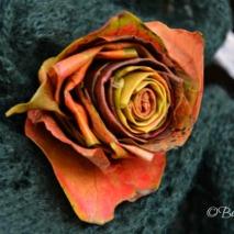 20141017_rose_di_foglie (4)_