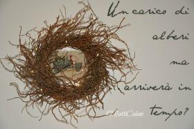 wreath di salice contorto