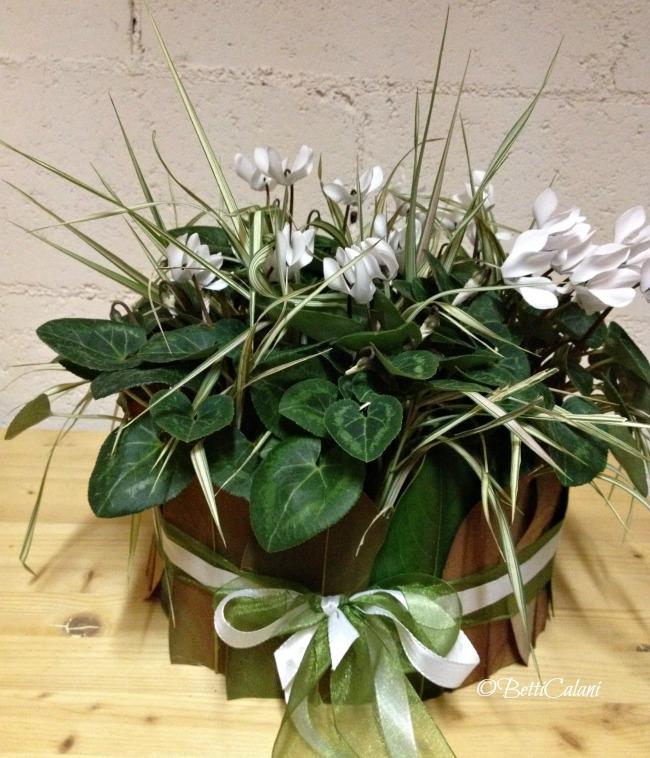 cachepot di magnolia con ciclamino