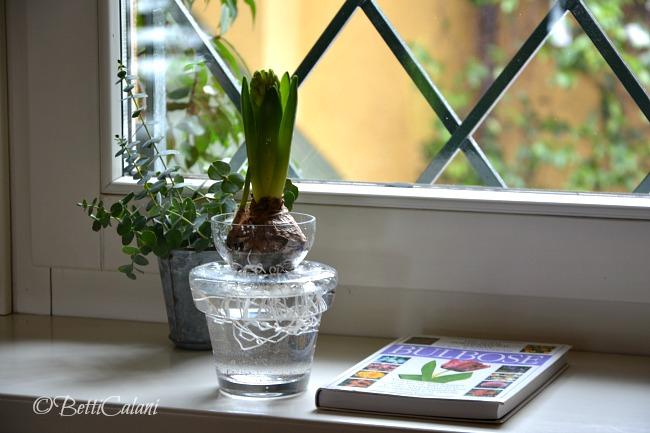 20150206_vaso per giacinto