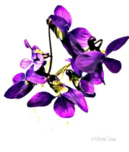 20150316_violette (19)_