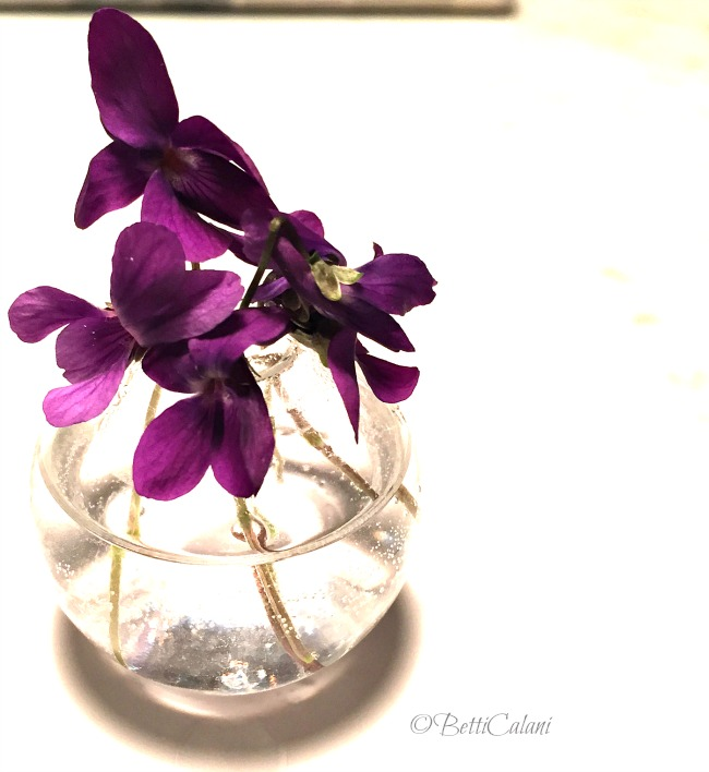 20150316_violette (21)_
