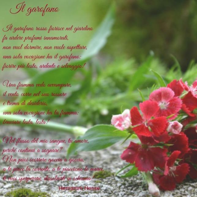20150417_poesia_il_garofano