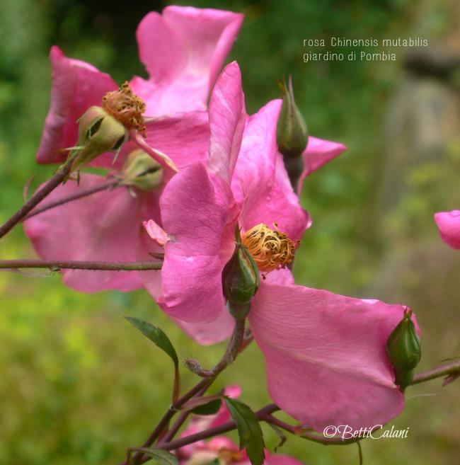 20100529_giardino di Pombia (37)