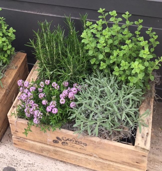 Fioridivenerd erbe aromatiche in cassetta passeggiandoingiardino - Erbe aromatiche in casa ...