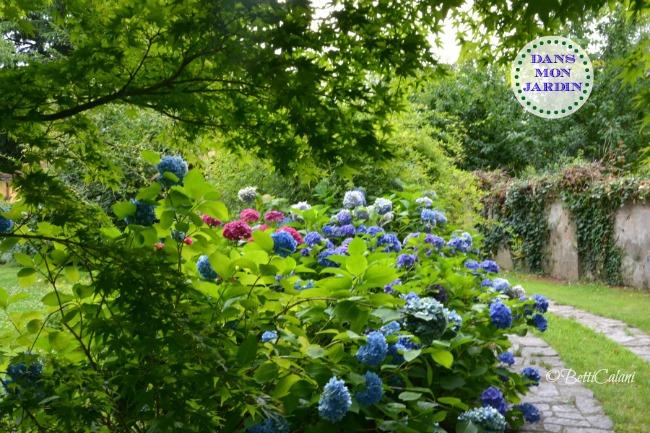 20140704_giardino di Carnago (12)_
