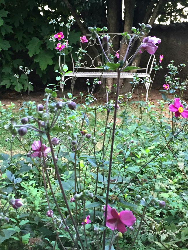 anemone_hupensis_praecox (1)
