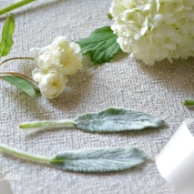 rosa Banksiae 'alba plena'