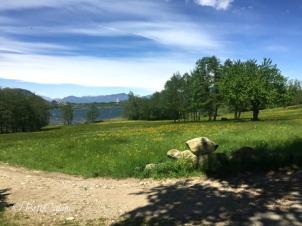 20160425_lago_di_Comabbio (5)_