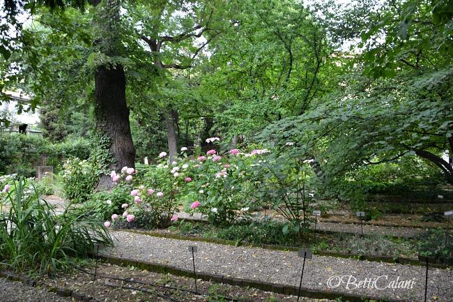 20160607_orto_botanico_brera_Wape (27)A