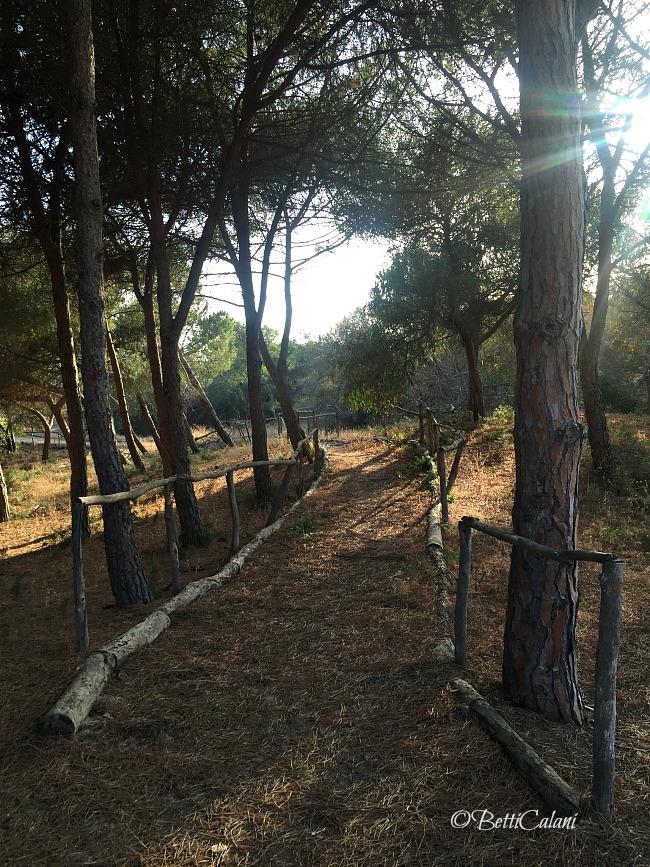 20160624_Sicilia_Iphone (17)