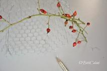 bacche di rosa Eglanteria