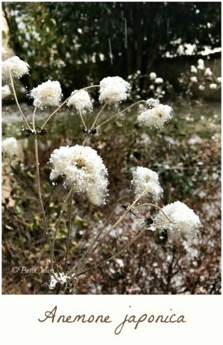 20170110_gennaio_in_giardino-2_a