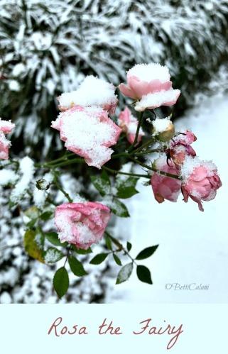 20170110_gennaio_in_giardino-3_a