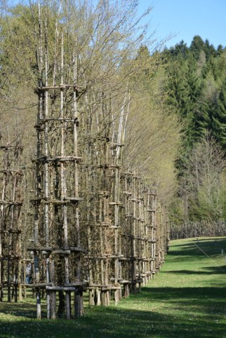 Cattedrale Vegetale/Tree Cathedral di Giuliano Mauri, 2001
