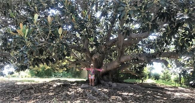 Decorazioni Natalizie Con Foglie Di Magnolia.Fioridivenerdi Con Le Foglie Della Magnolia