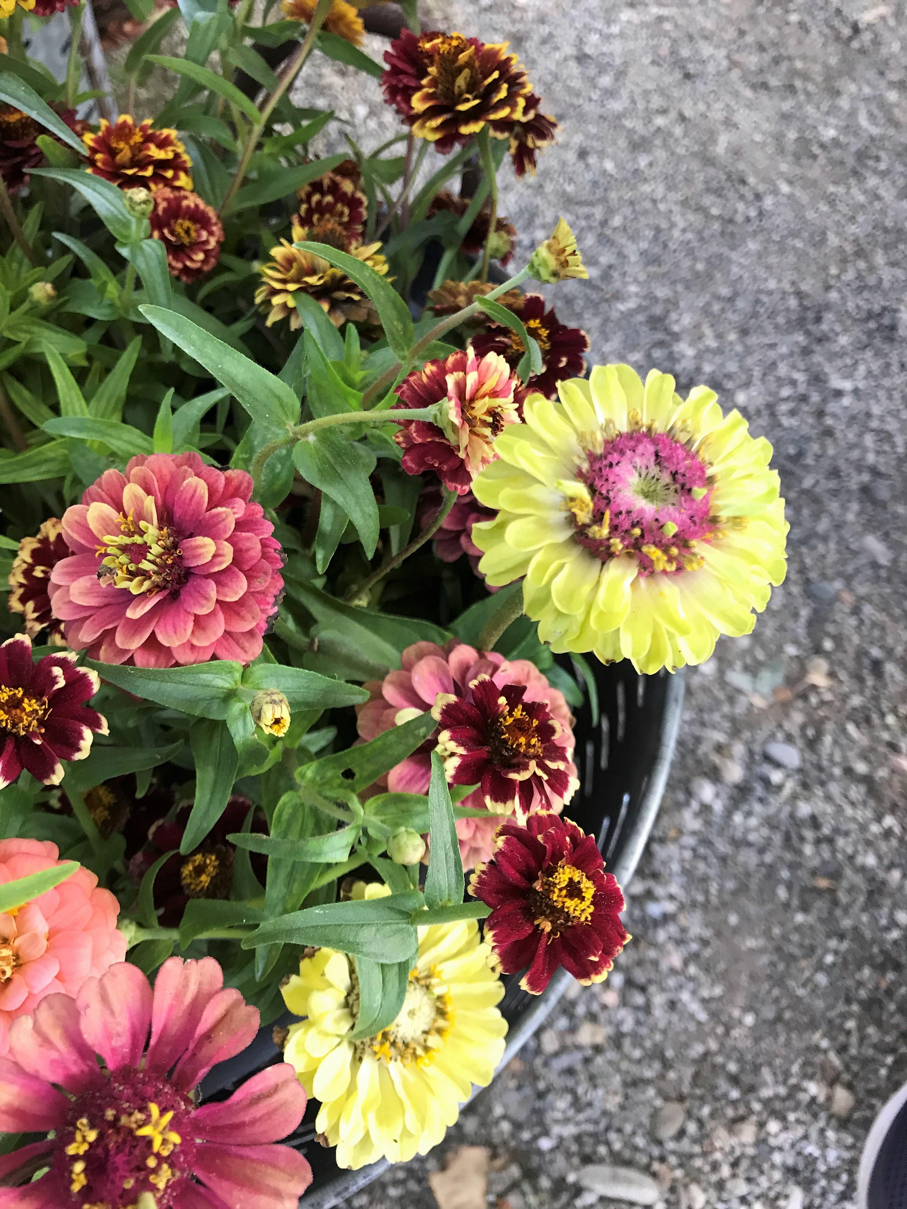Fiori Di Stagione Settembre workshop d'autunno con i fiori di olga's flower farm