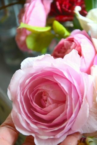 20190611_Conoscere_le_rose_e_le_peonie (12)