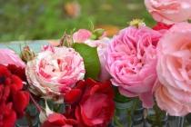 20190611_Conoscere_le_rose_e_le_peonie (4)